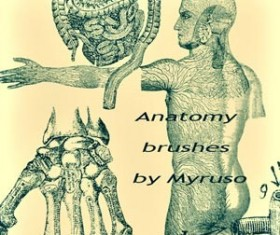 Anatomy Photoshop Brushes