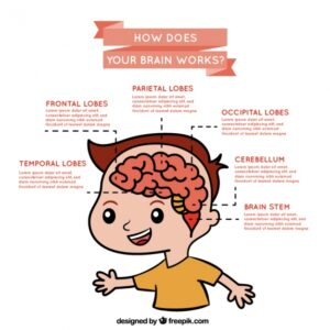 Infographic about brain operation Free Vector
